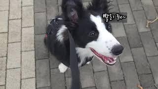 매일 오는 산책코스~항상 좋아하는 보더콜리 또리~^^