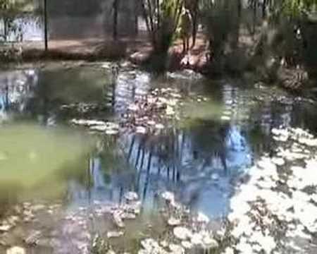 Johnstone River Croc Farm