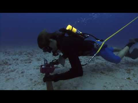Great Barrier Reef Sea Cucumber Research