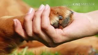 Какую породу собак завести? Советы и ответы.