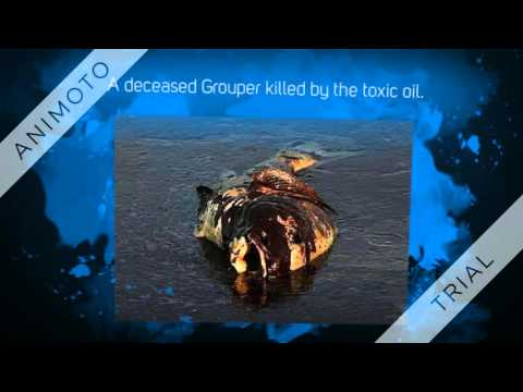 Ocean Conservancy Inc. Fund