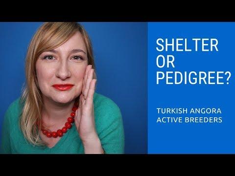 Sheltered or Pedigreed Cat?