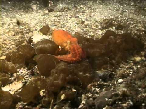 Case Of The Sponge 'Bob' (Video 2005)