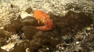 Case Of The Sponge 39Bob39 Video 2005