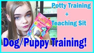 DOG/PUPPY TRAINING 101! Potty Training and Teaching sit! + MY WEBSITE IS OFFICIALLY OPENED!