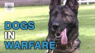 Military Working Dogs Training At Joint Base Elmendorf-richardson