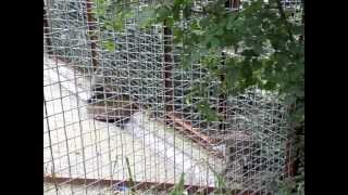 Макаки в ялтинском зоопарке