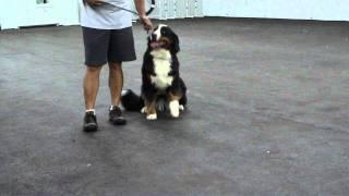 Aldens Kennels Inc.dog Training Naperville Il.