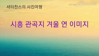 시흥 관곡지 겨울 연 이미지