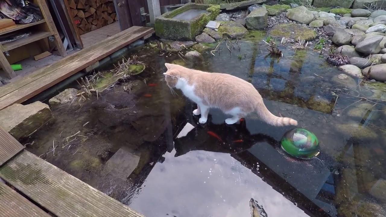 Katze versucht auf dem teich durch das eis fische zu for Fische in teich