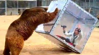 Топ самых ужасных случая нападения животных в зоопарке на людей!