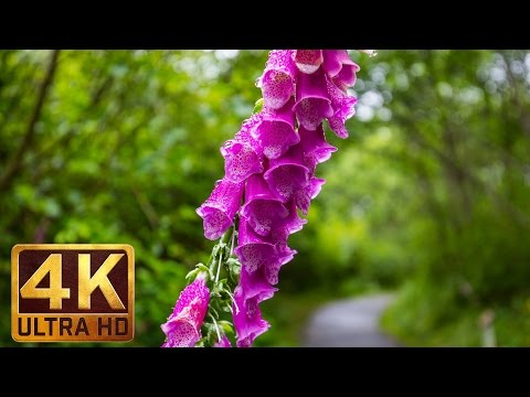 4k Relax Video with Natural Sounds - FLOWERS & LEAVES - Episode 2 - 2 hours