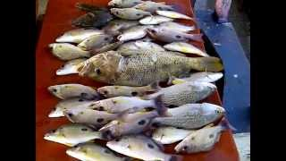 SINGAPORE FISHING CHANGI AH CHAI 3