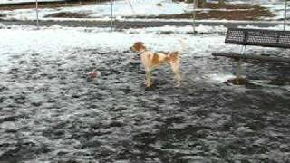 Coleman And Look Alike Dog At Iron Hill Dog Park Newark Delaware