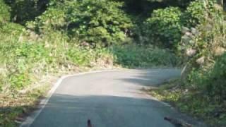 尾神岳へと続く山道で、偶然「オスのキジの喧嘩」に遭遇しました。