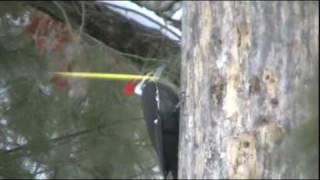 Pileated Woodpecker- Rocky River Nature Center, Ohio