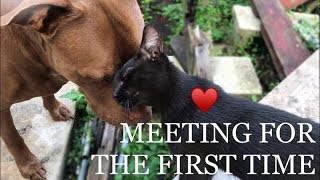 INTENSE FUNNY CAT AND DOG VIDEO (SCARY MEETING FOR THE FIRST TIME!!!)