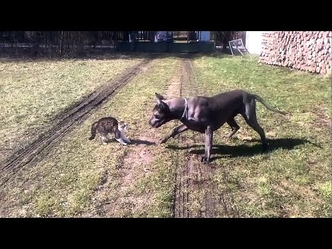 Funny Cat & Dog Vines compilation 2017