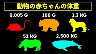 動物の赤ちゃんの体重を比べてみよう 生後どれぐらいで独立する?