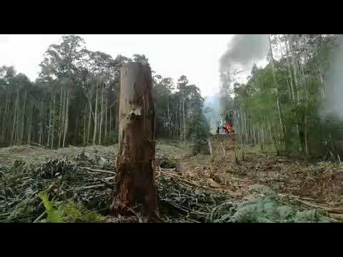 Arde una máquina procesadora de madera en Covas