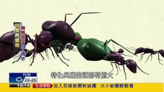 科學再發現 螞蟻雄兵分工精密-民視新聞