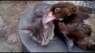 Копия видео Дружба животных