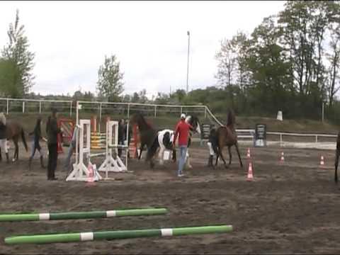Den koní - Mělník (nehoda 2011)