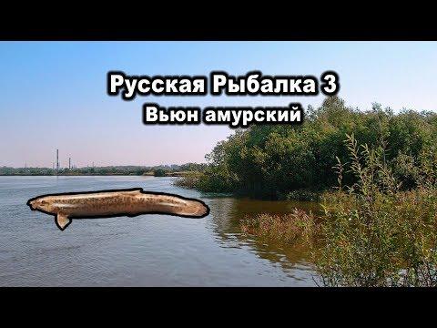 Русская рыбалка 3. Вьюн амурский. Редкости