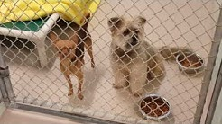 Dog Adoption Walk Thru 12-18-16