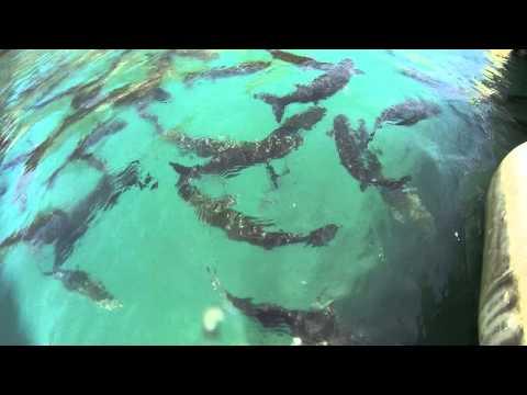 Los Gigantes Tenerife. Harbour Fish Filmed On A Gopro.