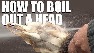 How to boil out a head