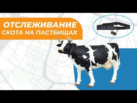 Спутниковое отслеживание скота на пастбищах