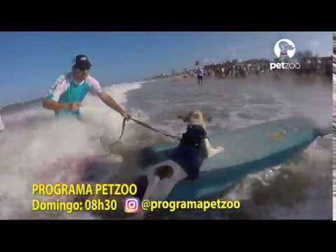 Surfing Dog Especial  domingo dia 05 de fevereiro no Programa Petzoo