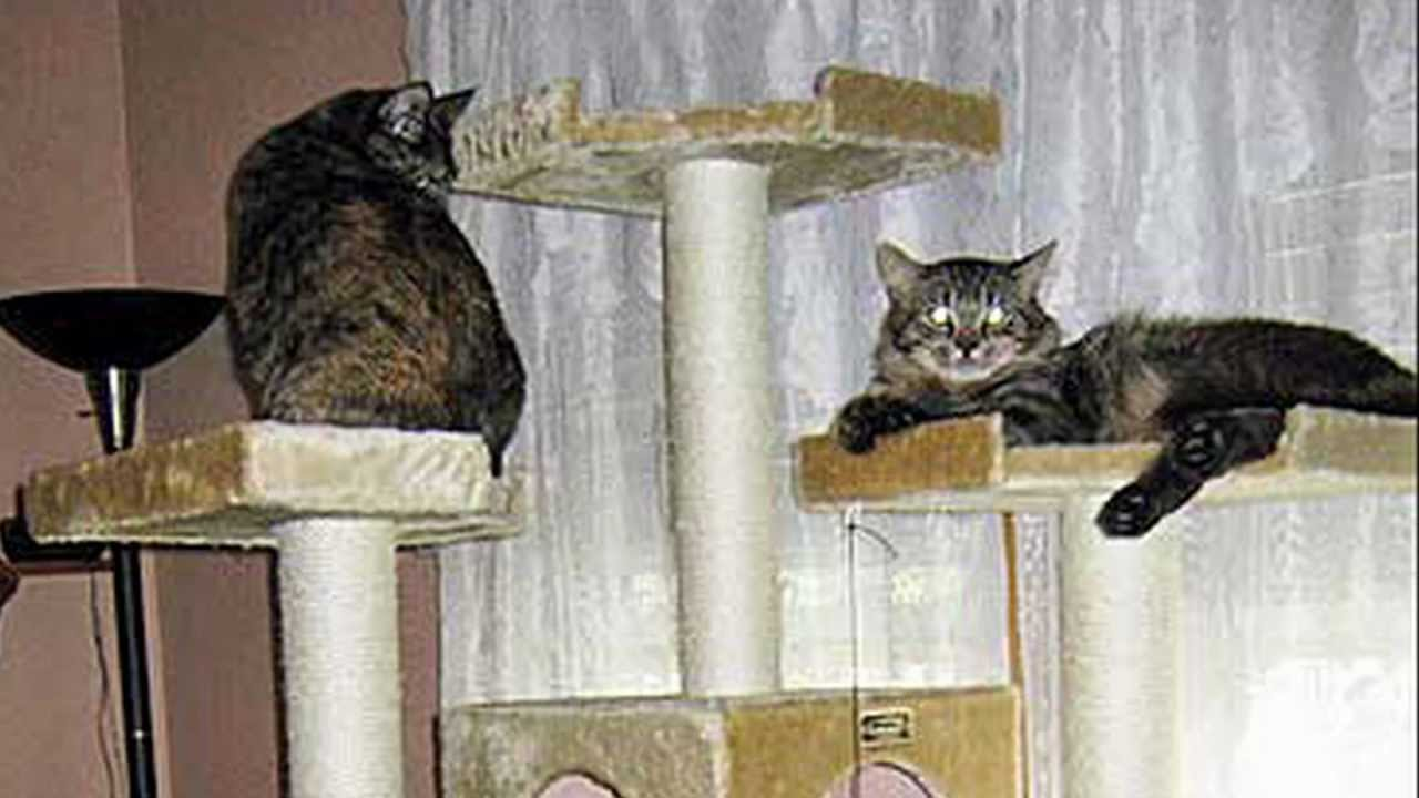 Hd how to make a cat tree step by step instructions for How to make a cat tower