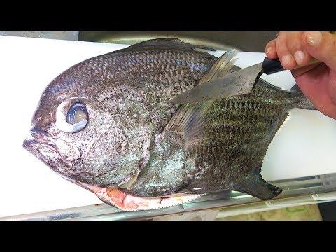 謎の深海魚エチオピアを捌いて食べる!