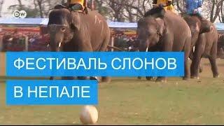 Фестиваль слонов в Непале  конкурс красоты, футбол и спринт