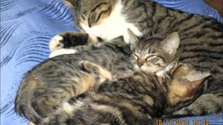 Королевство кошек