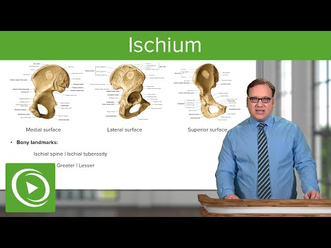 Ischium – Anatomy | Medical Education Videos