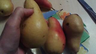 Долежит ли груша Талгарская красавица до Нового года.Эксперимент