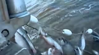 Особенности национальной рыбалки на Горе-Море