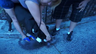 Pitbull Attack Dogs - Compilation 2014\ # Pittbull_attack Dogs