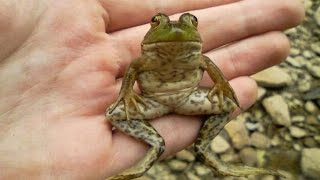 The story of a man and his pet frog Kermit