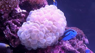 A Living Reef In An Aquarium, Courtesy Of The Tanked Guys! thumbnail