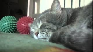 Кот реагирует на кашель.