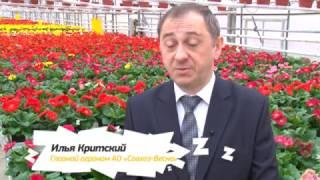 Где и почем купить цветы к 8 марта?(, 2017-03-07T14:49:46.000Z)