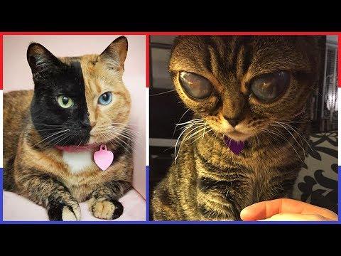 Top 10 Raarste Katten ter Wereld!