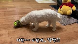반려동물 장난감, 강아지 운동하며 간식먹는 놀잇감