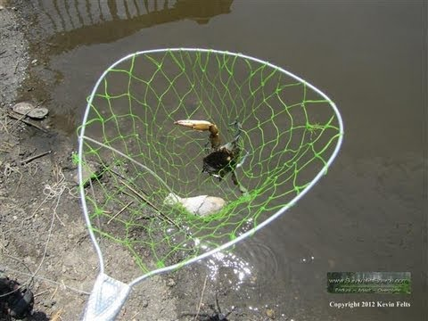 how to catch maryland blue crabs