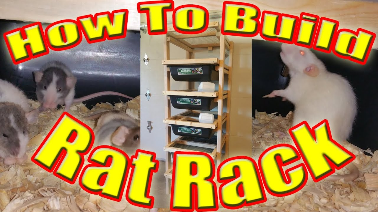 How To Build A Rat Breeding Rack Youtube