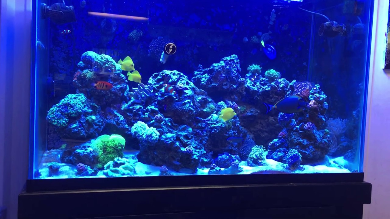 How to start a reef tank youtube for How to start a saltwater fish tank